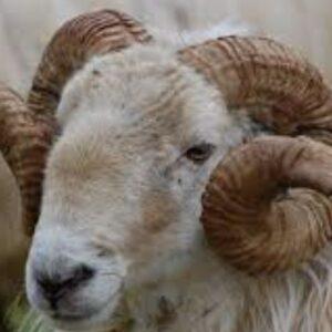 Profile picture of Braccio da montonei
